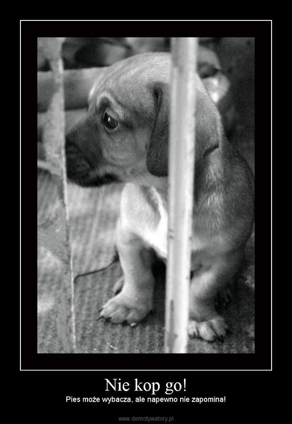 Nie kop go! – Pies może wybacza, ale napewno nie zapomina!