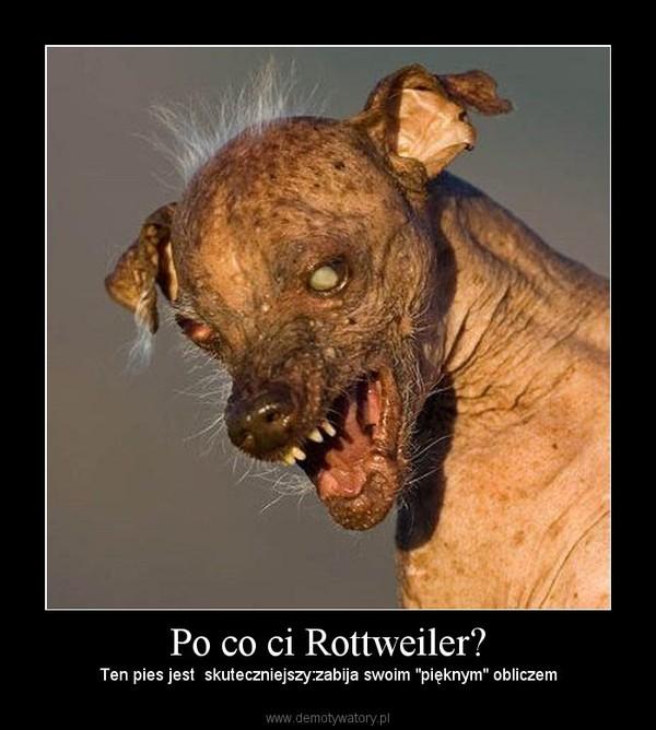 """Po co ci Rottweiler? – Ten pies jest  skuteczniejszy:zabija swoim """"pięknym"""" obliczem"""
