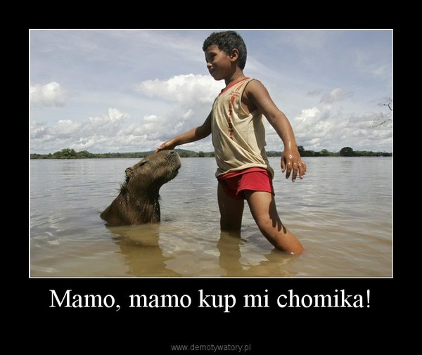 Mamo, mamo kup mi chomika! –