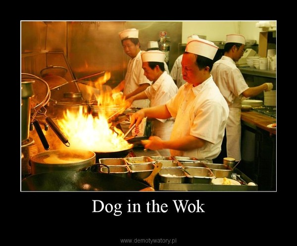 Dog in the Wok –