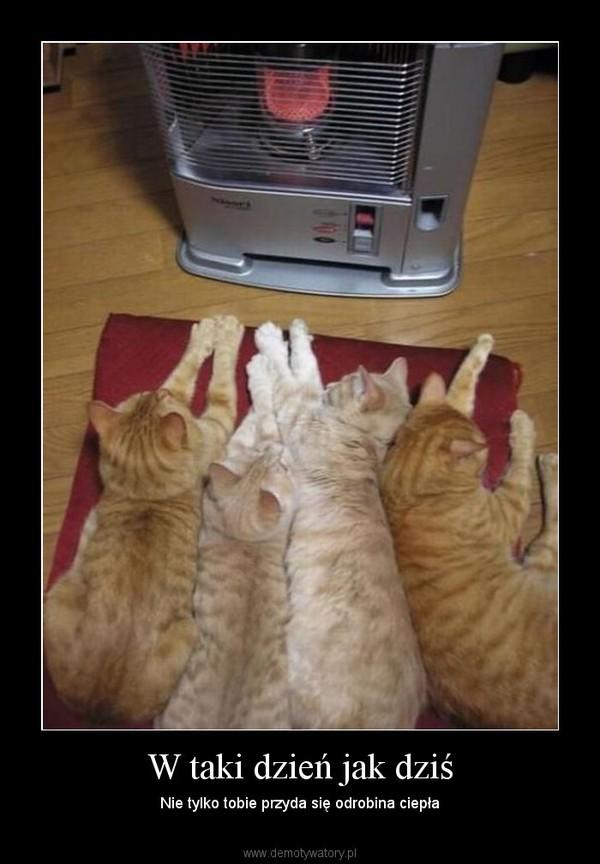 W taki dzień jak dziś – Nie tylko tobie przyda się odrobina ciepła