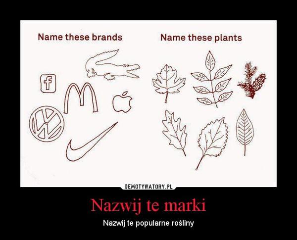 Nazwij te marki – Nazwij te popularne rośliny
