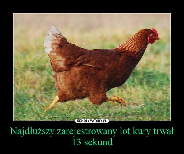 Najdłuższy zarejestrowany lot kury trwał 13 sekund –