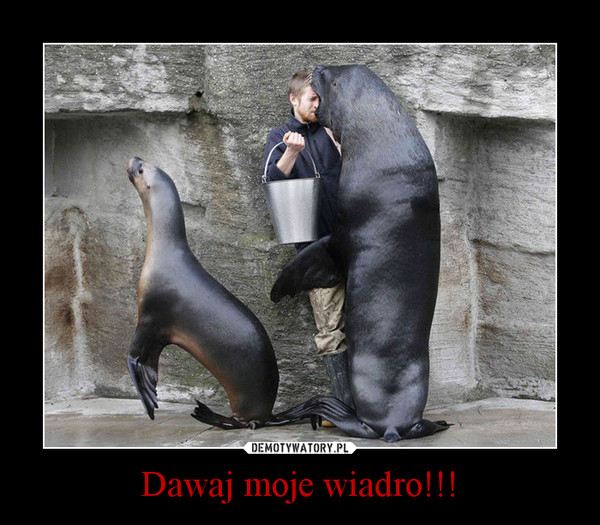 Dawaj moje wiadro!!! –