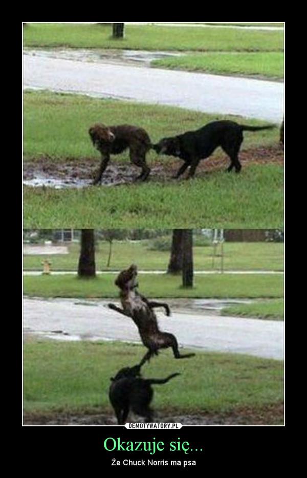 Okazuje się... – Że Chuck Norris ma psa