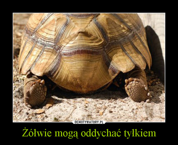Żółwie mogą oddychać tyłkiem –