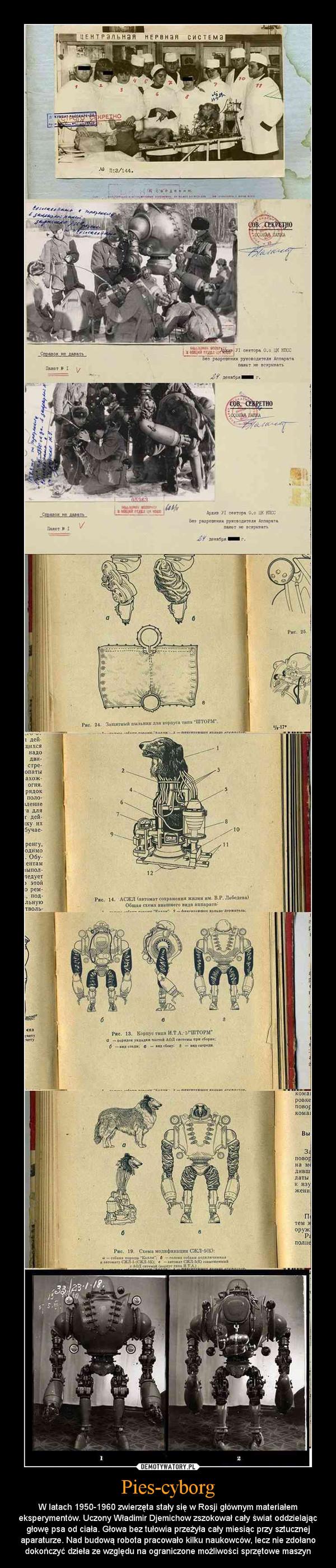 Pies-cyborg – W latach 1950-1960 zwierzęta stały się w Rosji głównym materiałem eksperymentów. Uczony Władimir Djemichow zszokował cały świat oddzielając głowę psa od ciała. Głowa bez tułowia przeżyła cały miesiąc przy sztucznej aparaturze. Nad budową robota pracowało kilku naukowców, lecz nie zdołano dokończyć dzieła ze względu na ograniczone możliwości sprzętowe maszyn