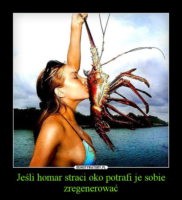 Jeśli homar straci oko potrafi je sobie zregenerować –