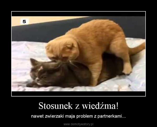 Stosunek z wiedźma! – nawet zwierzaki maja problem z partnerkami...
