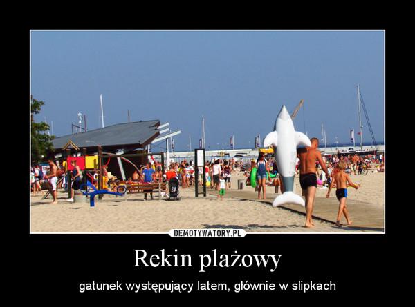 Rekin plażowy – gatunek występujący latem, głównie w slipkach