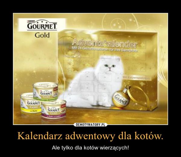 Kalendarz adwentowy dla kotów. – Ale tylko dla kotów wierzących!