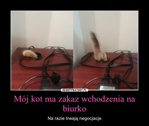 Mój kot ma zakaz wchodzenia na biurko – Na razie trwają negocjacje