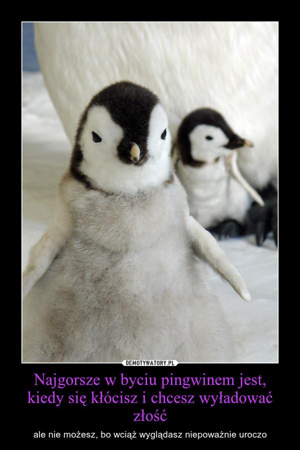 Najgorsze w byciu pingwinem jest, kiedy się kłócisz i chcesz wyładować złość – ale nie możesz, bo wciąż wyglądasz niepoważnie uroczo