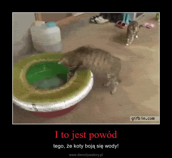 I to jest powód – tego, że koty boją się wody!