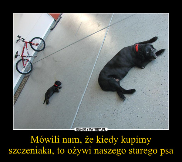 Mówili nam, że kiedy kupimy szczeniaka, to ożywi naszego starego psa –