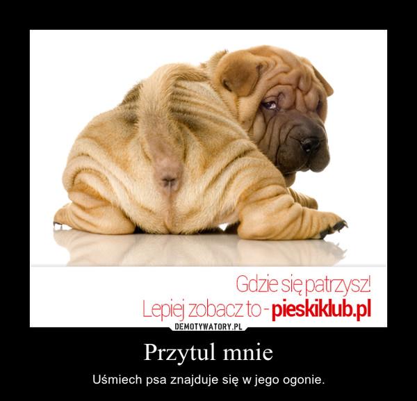 Przytul mnie – Uśmiech psa znajduje się w jego ogonie.
