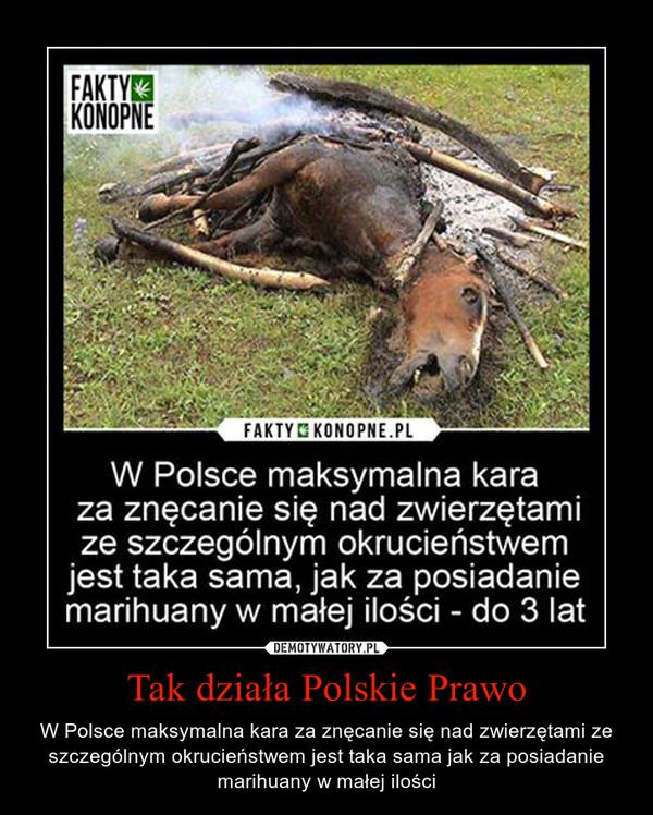 Tak działa Polskie Prawo – W Polsce maksymalna kara za znęcanie się nad zwierzętami ze szczególnym okrucieństwem jest taka sama jak za posiadanie marihuany w małej ilości