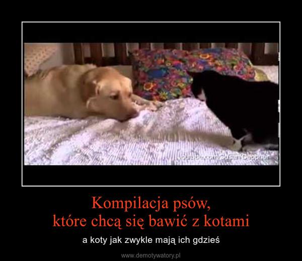 Kompilacja psów,które chcą się bawić z kotami – a koty jak zwykle mają ich gdzieś