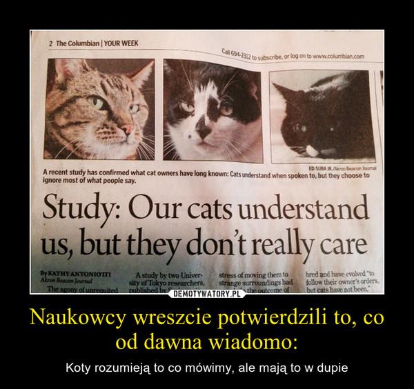 Naukowcy wreszcie potwierdzili to, co od dawna wiadomo: – Koty rozumieją to co mówimy, ale mają to w dupie