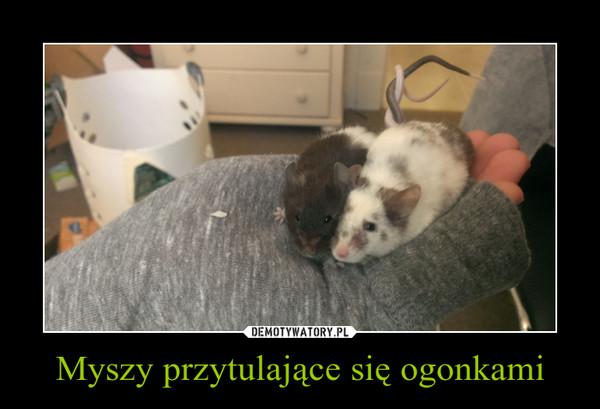 Myszy przytulające się ogonkami –
