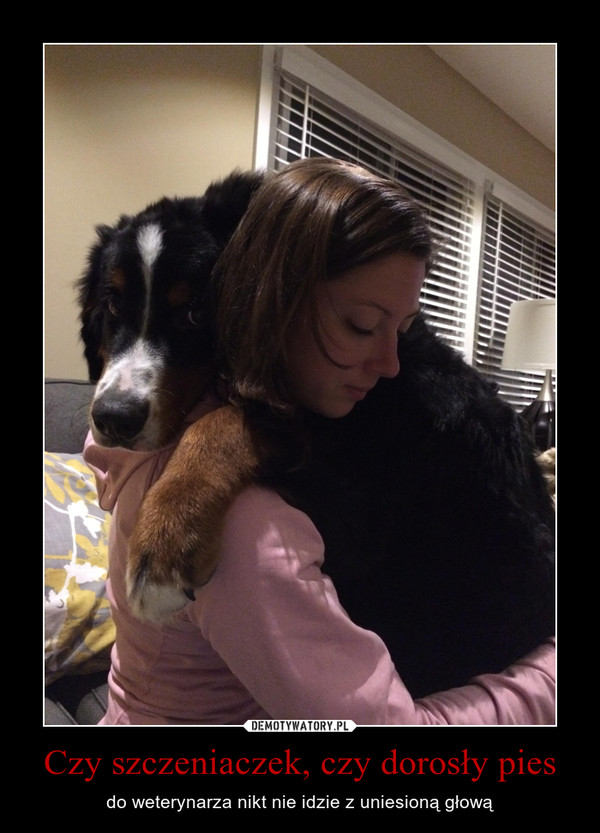 Czy szczeniaczek, czy dorosły pies – do weterynarza nikt nie idzie z uniesioną głową