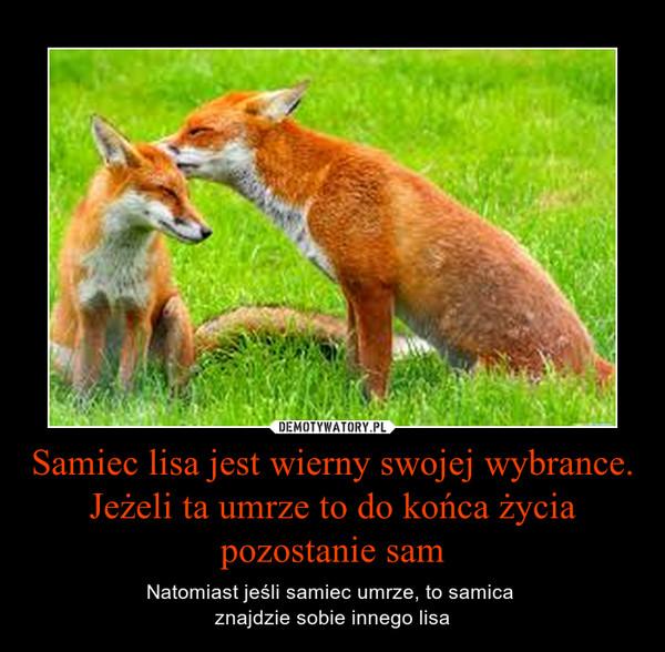 Samiec lisa jest wierny swojej wybrance. Jeżeli ta umrze to do końca życia pozostanie sam – Natomiast jeśli samiec umrze, to samica znajdzie sobie innego lisa