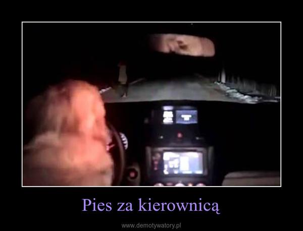 Pies za kierownicą –