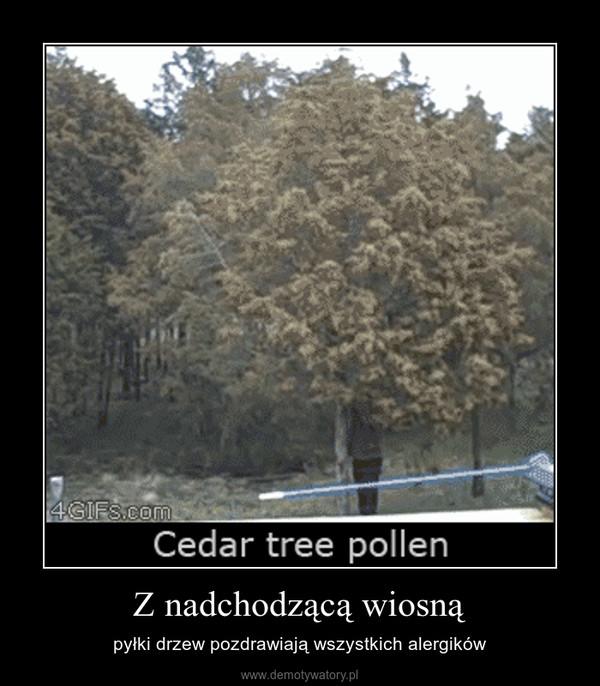 Z nadchodzącą wiosną – pyłki drzew pozdrawiają wszystkich alergików