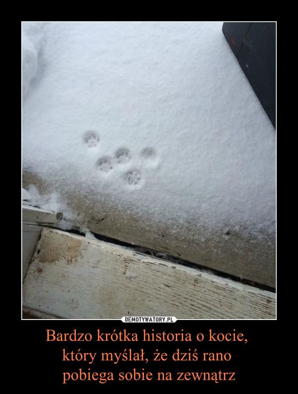 Bardzo krótka historia o kocie, który myślał, że dziś rano pobiega sobie na zewnątrz –