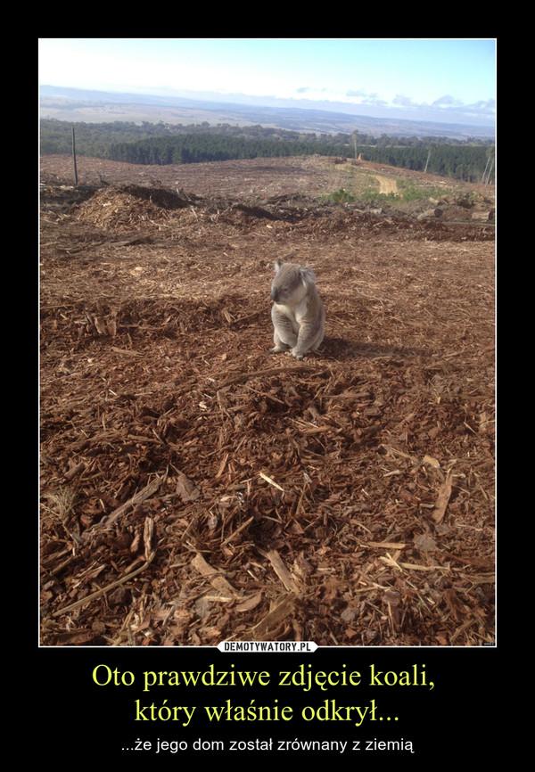 Oto prawdziwe zdjęcie koali, który właśnie odkrył... – ...że jego dom został zrównany z ziemią