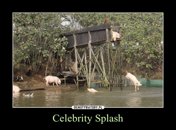 Celebrity Splash –