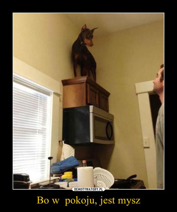Bo w  pokoju, jest mysz –