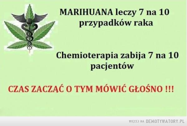 Marihuana –  Marihuana leczy 7 na 10 przypadków rakaChemioterapia zabija 7 na 10 pacjentówCzas zacząć o tym mówić głośno!