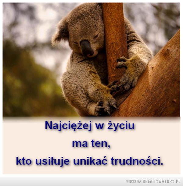 ..o lekkim życiu –