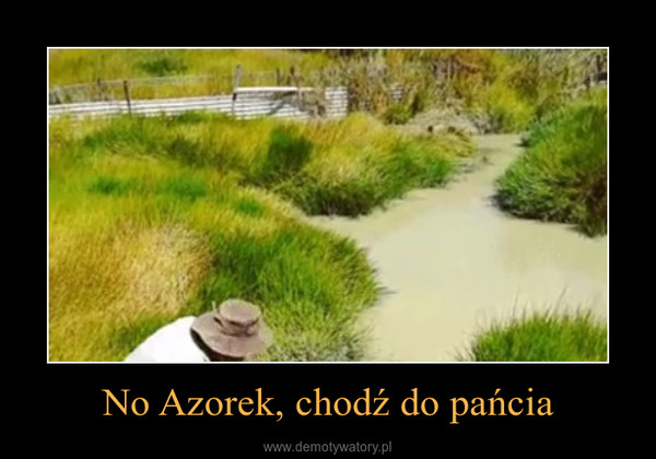 No Azorek, chodź do pańcia –