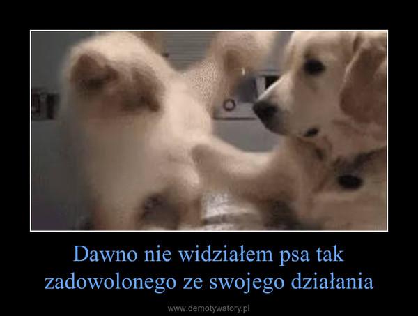 Dawno nie widziałem psa tak zadowolonego ze swojego działania –
