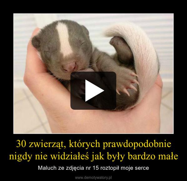 30 zwierząt, których prawdopodobnie nigdy nie widziałeś jak były bardzo małe – Maluch ze zdjęcia nr 15 roztopił moje serce