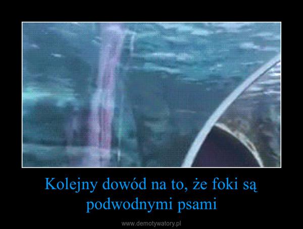 Kolejny dowód na to, że foki są podwodnymi psami –
