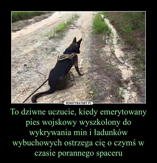 To dziwne uczucie, kiedy emerytowany pies wojskowy wyszkolony do wykrywania min i ładunków wybuchowych ostrzega cię o czymś w czasie porannego spaceru –