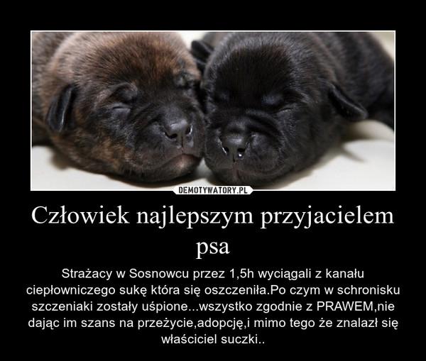 Człowiek najlepszym przyjacielem psa – Strażacy w Sosnowcu przez 1,5h wyciągali z kanału ciepłowniczego sukę która się oszczeniła.Po czym w schronisku szczeniaki zostały uśpione...wszystko zgodnie z PRAWEM,nie dając im szans na przeżycie,adopcję,i mimo tego że znalazł się właściciel suczki..