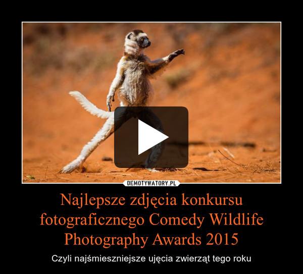 Najlepsze zdjęcia konkursu fotograficznego Comedy Wildlife Photography Awards 2015 – Czyli najśmieszniejsze ujęcia zwierząt tego roku