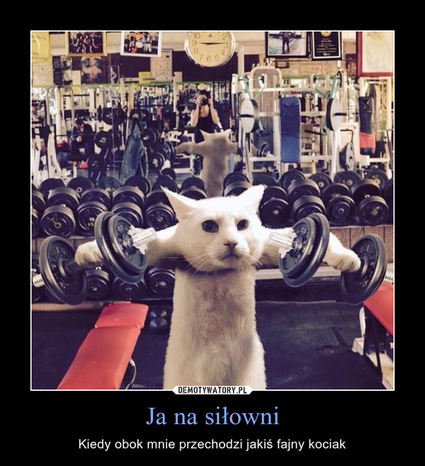 Ja na siłowni – Kiedy obok mnie przechodzi jakiś fajny kociak