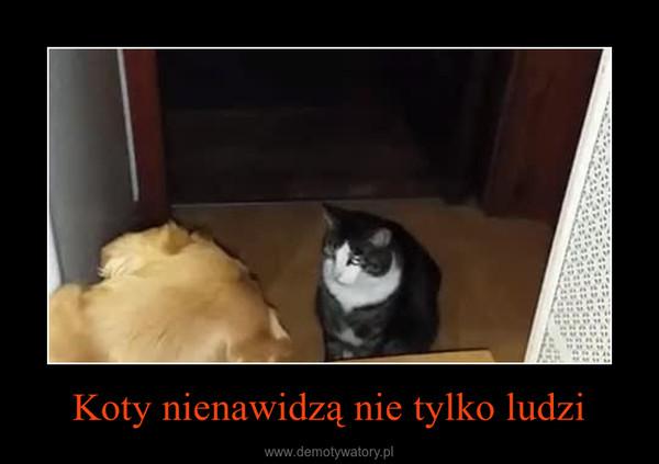 Koty nienawidzą nie tylko ludzi –