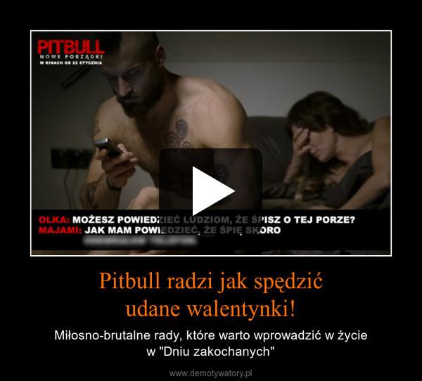 """Pitbull radzi jak spędzićudane walentynki! – Miłosno-brutalne rady, które warto wprowadzić w życiew """"Dniu zakochanych"""""""