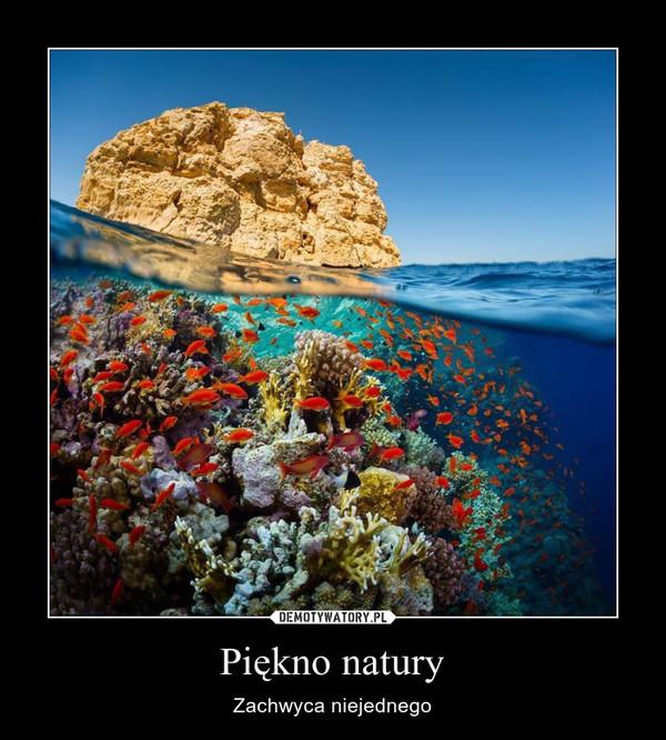 Piękno natury – Zachwyca niejednego