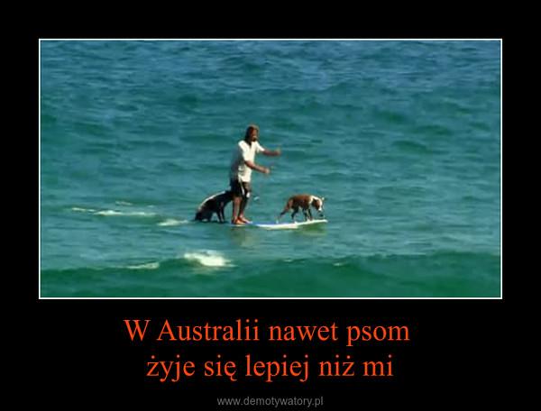 W Australii nawet psom żyje się lepiej niż mi –