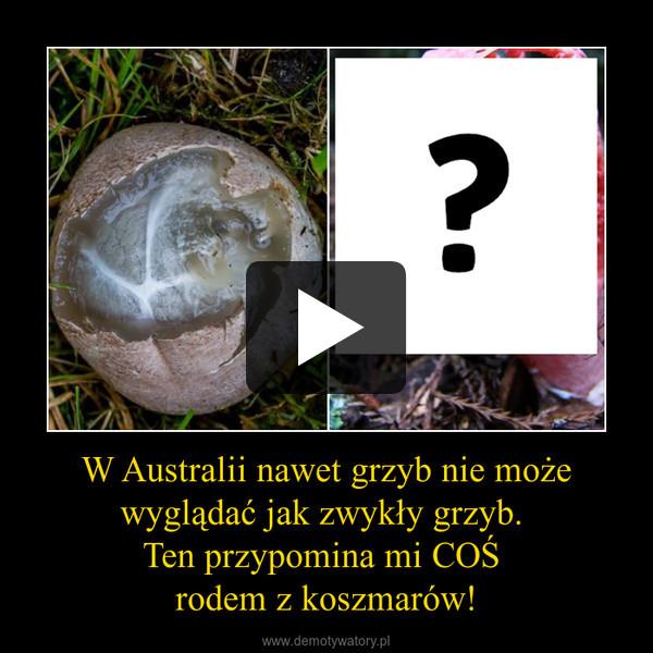 W Australii nawet grzyb nie może wyglądać jak zwykły grzyb. Ten przypomina mi COŚ rodem z koszmarów! –