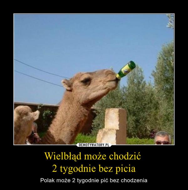 Wielbłąd może chodzić 2 tygodnie bez picia – Polak może 2 tygodnie pić bez chodzenia