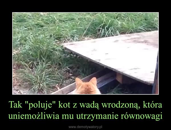 """Tak """"poluje"""" kot z wadą wrodzoną, która uniemożliwia mu utrzymanie równowagi –"""