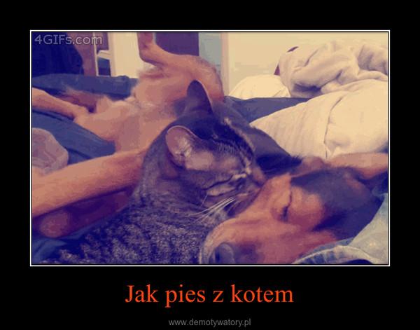 Jak pies z kotem –